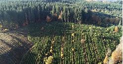 Plantons pour l'avenir : 3 millions d'euros collectés pour reboiser 1 000 ha de forêts en France